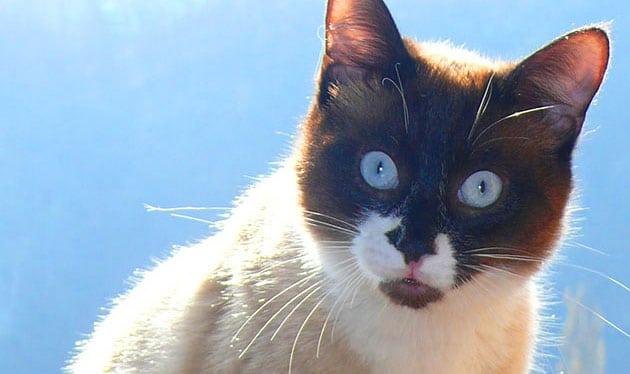 Прага глазами кошек - экскурсия AndyGo