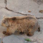 Медведи в замке Чешский Крумлов - экскурсия AndyGo